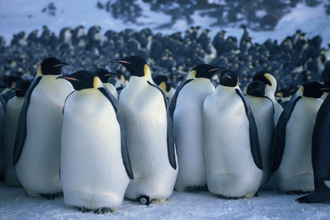 March of the penguins  © Warner Bros